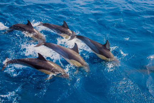 Dolphin「Five dolphins re-entering water together」:スマホ壁紙(16)