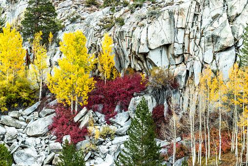 インヨー国有林「Eastside Fall Colors in Bishop Creek」:スマホ壁紙(8)