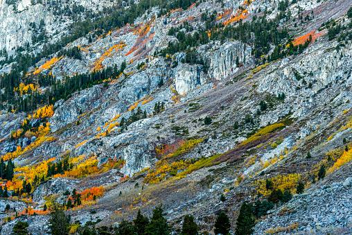インヨー国有林「Eastside Fall Colors in Bishop Creek」:スマホ壁紙(9)