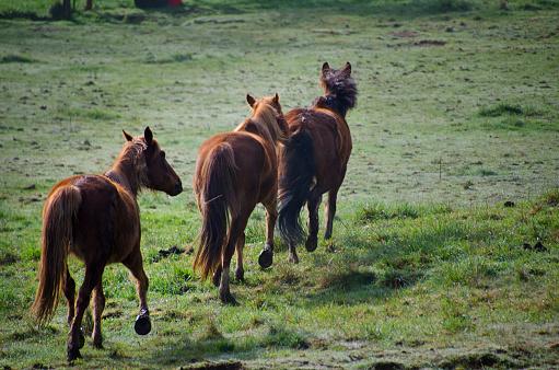 Stallion「Horses in Green Pasture」:スマホ壁紙(9)