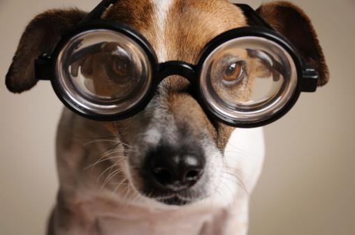 Nerd「Geeky Dog」:スマホ壁紙(11)