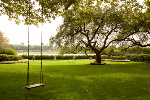 Leisure Equipment「Tree swing in urban park」:スマホ壁紙(1)