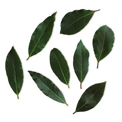 Bay Leaf「Bay leafs」:スマホ壁紙(9)