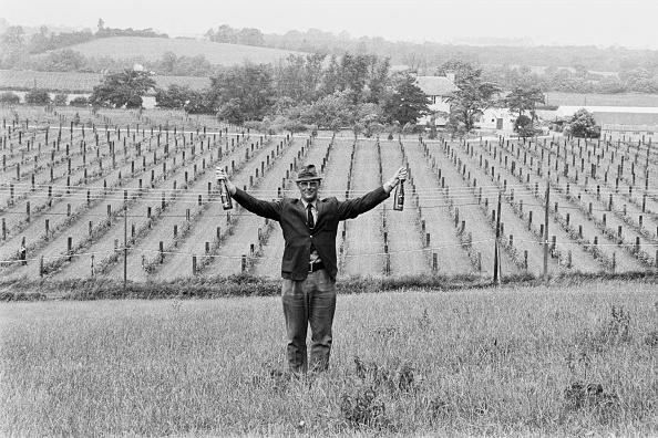 ヒューマンインタレスト「New Hall Vineyards」:写真・画像(11)[壁紙.com]