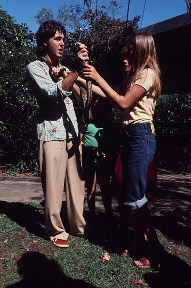 Koala「McCartney Family」:写真・画像(17)[壁紙.com]