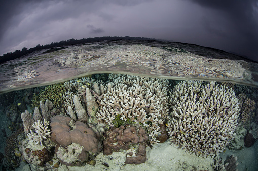 ソロモン諸島「A fragile coral reef grows in shallow water in the Solomon Islands.」:スマホ壁紙(6)