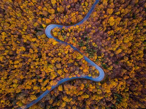 秋「無人偵察機: 航空遠征 - 湾曲した道路と秋の森」:スマホ壁紙(2)