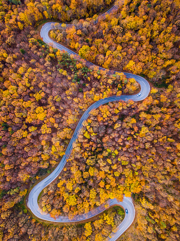 秋「無人偵察機: 航空遠征 - 秋の森で曲がりくねった道」:スマホ壁紙(8)