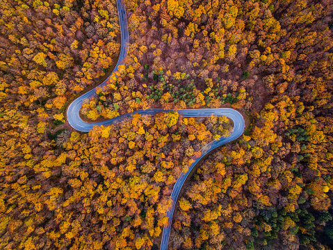 Lumber Industry「Drones: An Aerial Road Trip - colorful autumn forest with curvy country road」:スマホ壁紙(16)