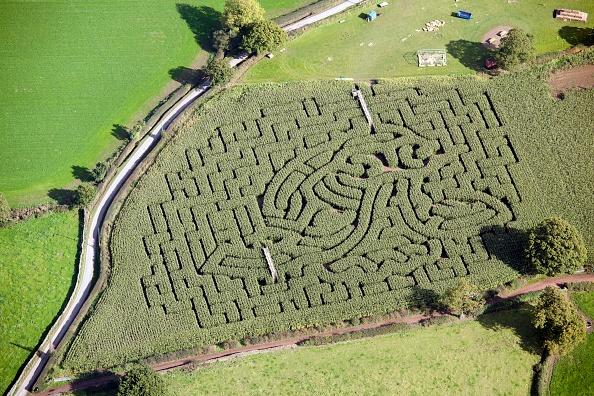 Rustic「Maize Maze」:写真・画像(10)[壁紙.com]