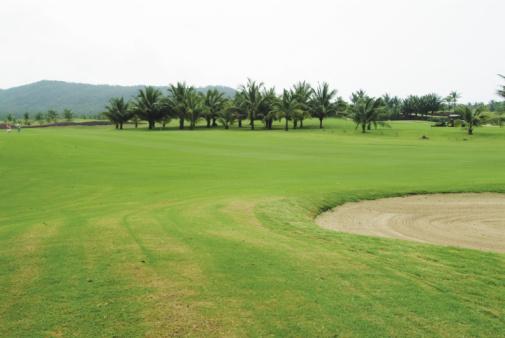 Sand Trap「Tropical golf course」:スマホ壁紙(15)