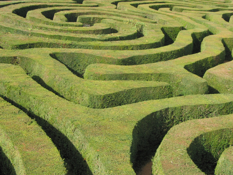 Lost「Neatly clipped swirling Hedge Maze in the sunshine」:スマホ壁紙(6)