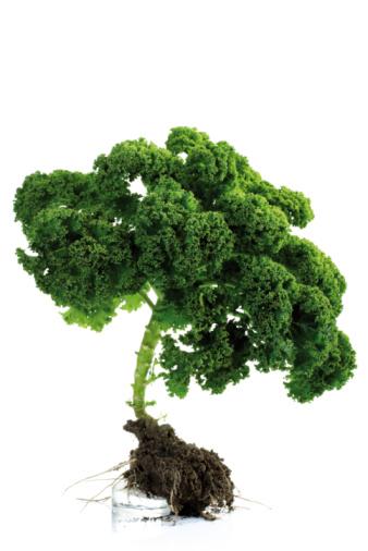 Cabbage Family「Kale, close-up」:スマホ壁紙(16)