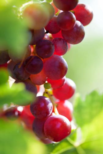 Grape「Fresh grape」:スマホ壁紙(7)