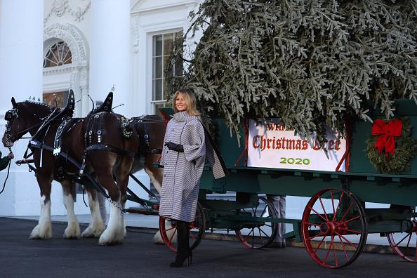 US First Lady「First Lady Melania Trump Receives 2020 White House Christmas Tree」:写真・画像(0)[壁紙.com]