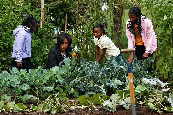 Broccoli「First Lady Hosts White House Kitchen Garden Fall Harvest」:写真・画像(3)[壁紙.com]