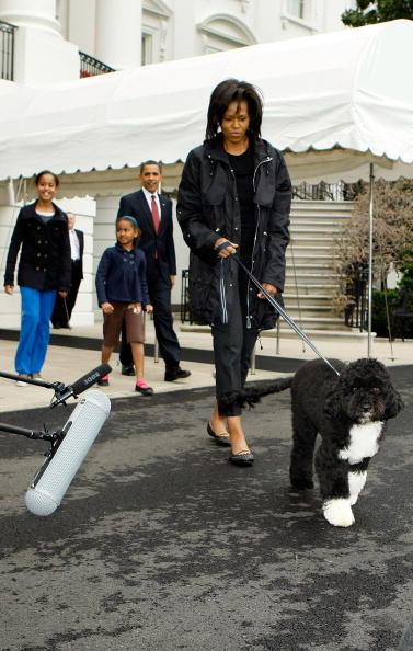 Pet Owner「The White House Debuts The Obamas' New Dog Bo, A Portuguese Water Dog」:写真・画像(18)[壁紙.com]