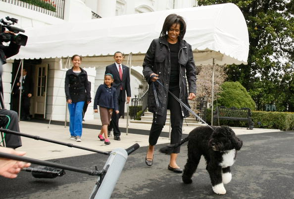 Following - Moving Activity「The White House Debuts The Obamas' New Dog Bo, A Portuguese Water Dog」:写真・画像(9)[壁紙.com]
