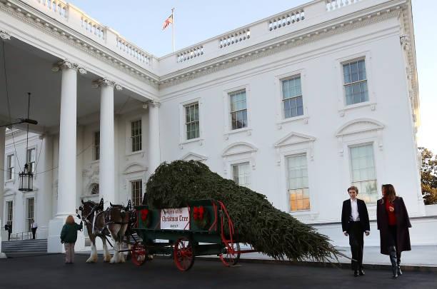 Christmas「First Lady Melania Trump Receives White House Christmas Tree」:写真・画像(1)[壁紙.com]