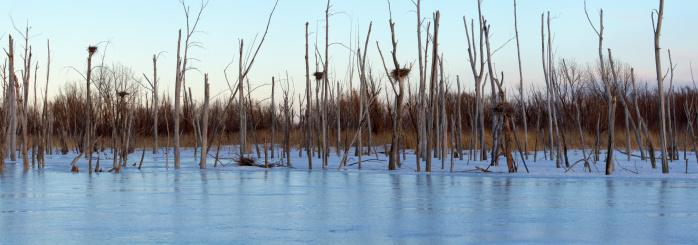 Montérégie「Great Blue Heron Nests in Frozen Marsh」:スマホ壁紙(10)