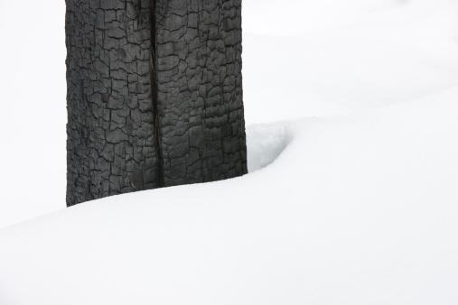 Yoho National Park「Bark of a burnt tree in a forest near Field, Yoho National Park in the Canadian Rockies, Canada」:スマホ壁紙(6)