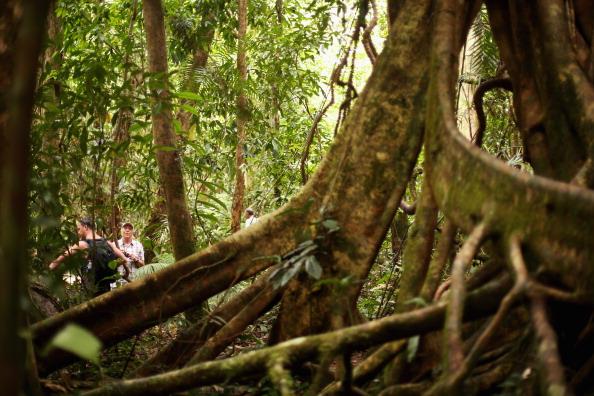 Rainforest「Scenes Of The Cairns Region」:写真・画像(17)[壁紙.com]