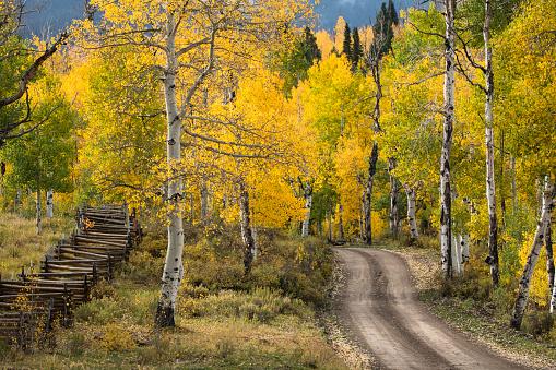 アンコンパグレ国有林「Rural forest service road through golden aspen trees (Populus Tremuloides) in fall, Sneffels Wilderness Area, Uncompahgre National Forest, Colorado, USA」:スマホ壁紙(0)