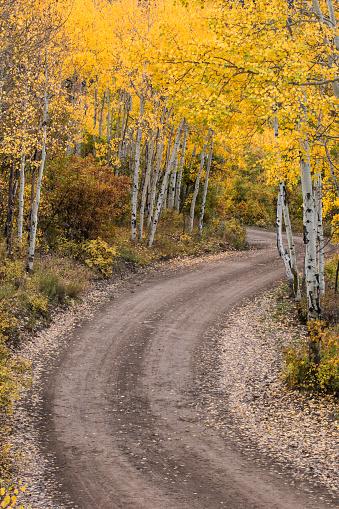 アンコンパグレ国有林「Rural forest service road and golden aspen trees (Populus Tremuloides) in fall, Sneffels Wilderness Area, Uncompahgre National Forest, Colorado, USA」:スマホ壁紙(3)