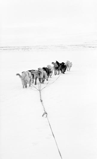 Snow sled「Sled dogs」:スマホ壁紙(2)