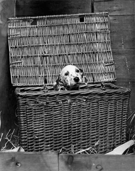 Basket「I'm Safe In Here」:写真・画像(16)[壁紙.com]