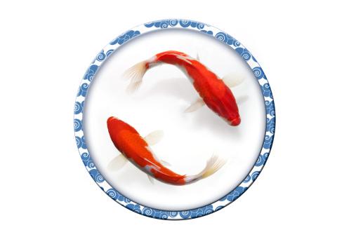 Carp「Digital composite of gold fish」:スマホ壁紙(10)