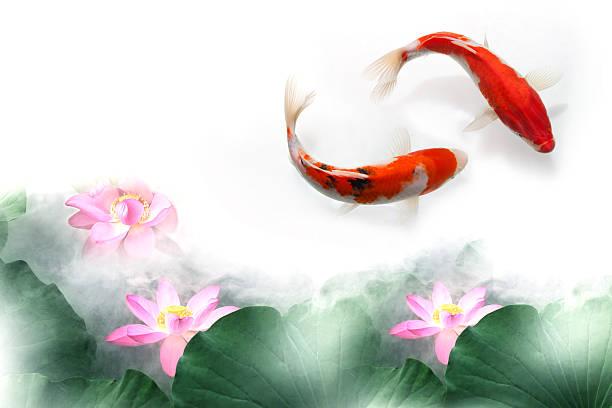 Digital composite of gold fish and lotus:スマホ壁紙(壁紙.com)