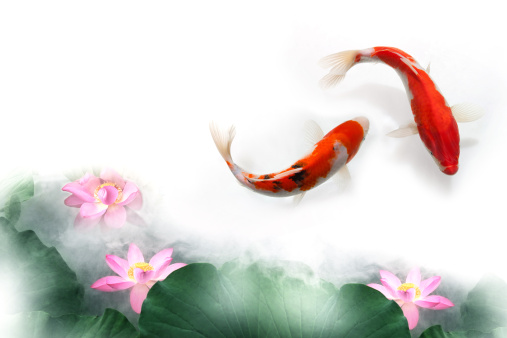 Goldfish「Digital composite of gold fish and lotus」:スマホ壁紙(19)