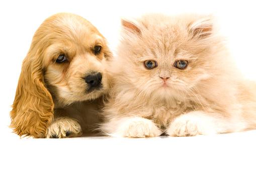 子猫「、2 つのご友人と」:スマホ壁紙(10)