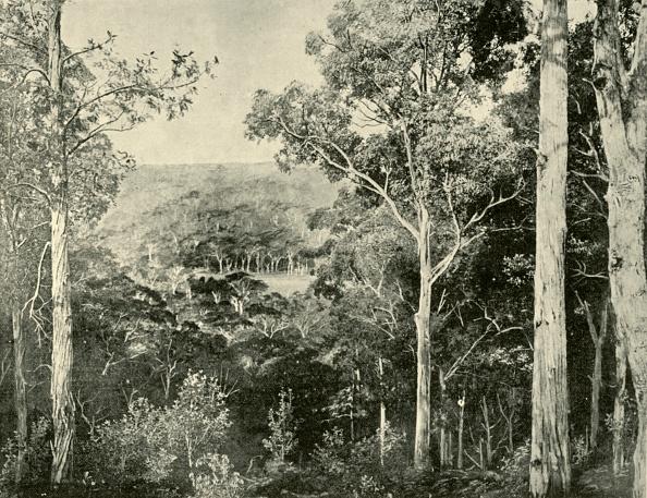 Tropical Tree「The Blue Mountains」:写真・画像(10)[壁紙.com]