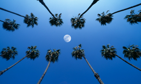 月「Moon between rows of palm trees, Hollywood, Los Angeles, California, USA」:スマホ壁紙(3)