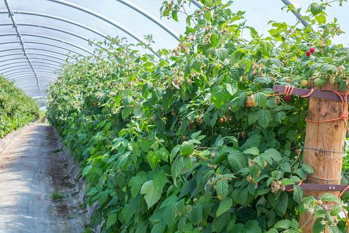 Fertilizer「Berry farm in Scotland, UK.」:スマホ壁紙(14)