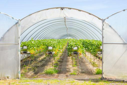 Fertilizer「Berry farm in Scotland, UK.」:スマホ壁紙(19)