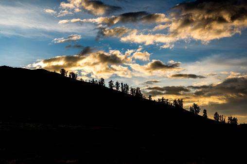 インヨー国有林「Storm Clouds in the Bristlecone Forest」:スマホ壁紙(6)