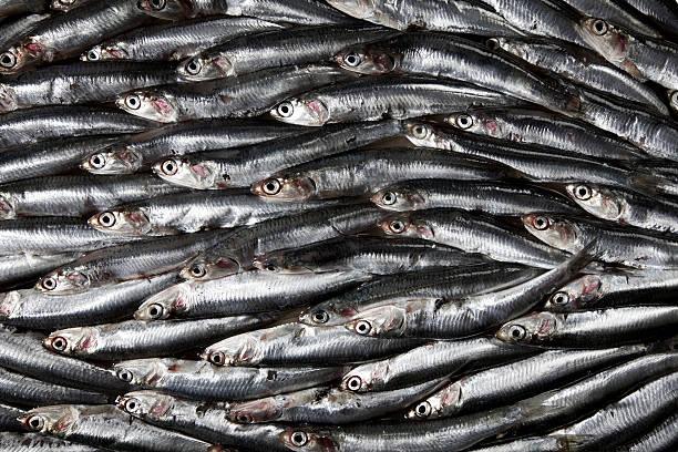 Sardines:スマホ壁紙(壁紙.com)