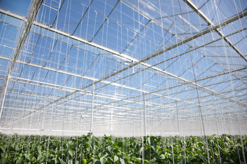 Chichester「Strings hanging from roof of greenhouse」:スマホ壁紙(12)