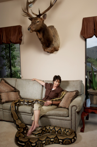 雪「Mature woman with python sitting on couch in living room」:スマホ壁紙(0)