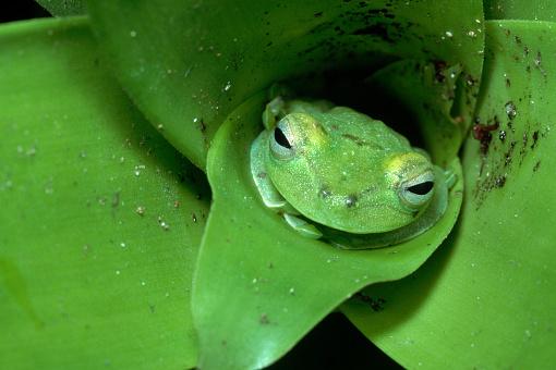 Montane Rainforest「Treefrog in Center of Plant」:スマホ壁紙(15)