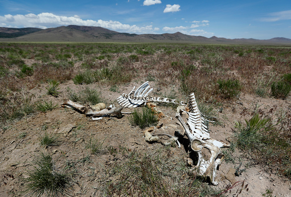 野生動物「Trump Bureau Of Land Management Budget Seeks To Cull U.S. Wild Horses」:写真・画像(13)[壁紙.com]