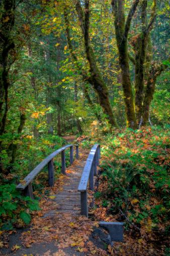 Umpqua National Forest「Trail and Bridge in Umpqua N.F. Autumn time」:スマホ壁紙(13)