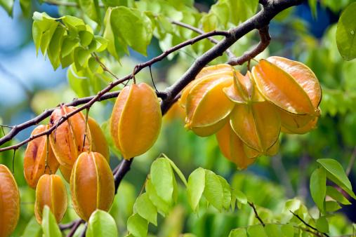 Starfruit「Carambola fruits on tree, close-up」:スマホ壁紙(19)