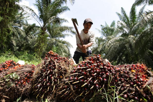 Seasoning「Deforestation Continues In Sumatra」:写真・画像(1)[壁紙.com]