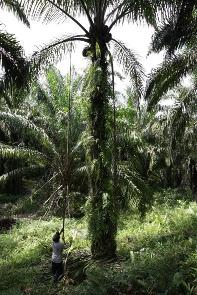 Seasoning「Deforestation Continues In Sumatra」:写真・画像(2)[壁紙.com]