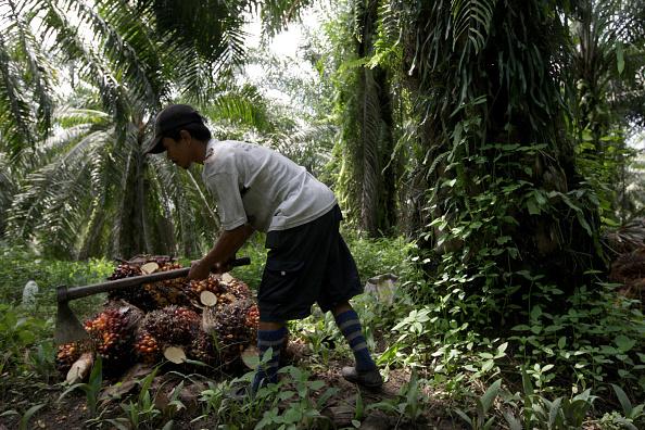 Seasoning「Deforestation Continues In Sumatra」:写真・画像(11)[壁紙.com]