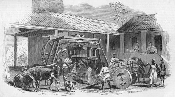 Brazilian Sugar Mill:ニュース(壁紙.com)